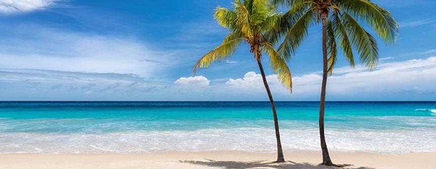 palm trees header image